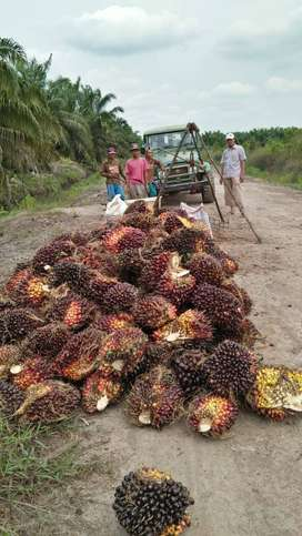 Kebun Sawit 90ha di Talang Kelapa dekat Kota Palembang, Boleh Pecahan