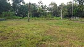 25 Cent Land For Sale In Pattimattom