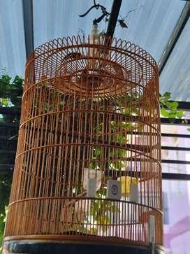 Sangkar burung untuk murai dan sejenis