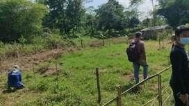 Disewakan tanah untuk berkebun / beternak