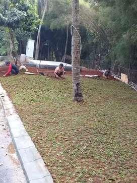 jual rumput gajah mini.pembuatan taman.