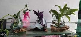 Aquarium bisa jadi pot tanaman juga