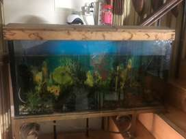 Aquarium 4 feet length and 2 feet height
