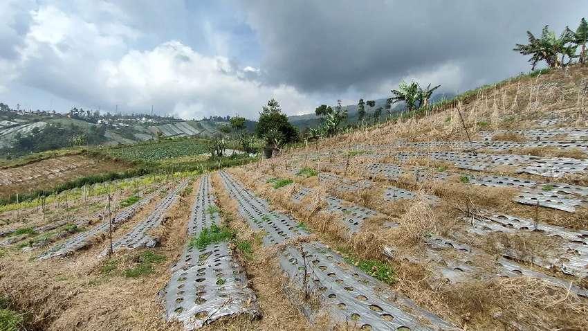 Investasi Daerah Berkembang, Tanah perladangan dekat dengan wisata.