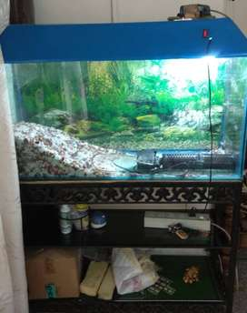 Fish Aquarium with stand for sale