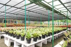 Banyak Manfaat! Jaring Paranet Untuk Peneduh Kebun, Halaman, Garasi!