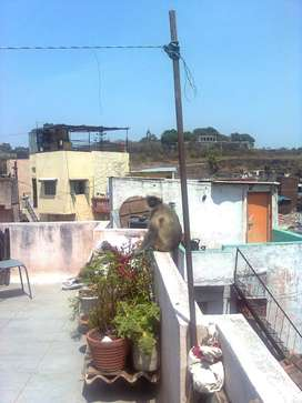 7 room independent house in yerwada jai jawan nagar
