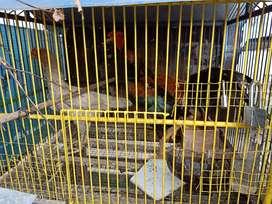 Ayam kampung murmer aja