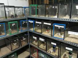 hamster eceran bandung