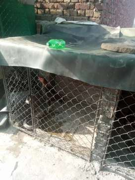 Cage for sale iron made