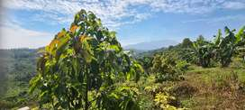 Kavling Tanah Produktif Bandung Dekat Kota Baru Parahyangan
