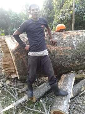 Jasa Tebang Pohon JABODETABEK