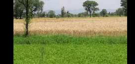 42 kanal agricultural land in Bhera for Sale