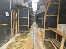 Dijual Farm Jamur aktif omset ratusan juta per bulan   Dijual Kebun