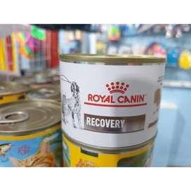 Royal canin recovery kaleng 195 gram makanan basah kucing sakit