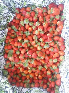 strawbery berastagi