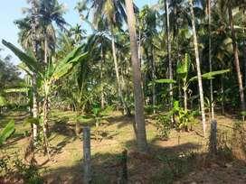 next 2 postoffice 49cent residential land 4 sale in ponukkara thrissur