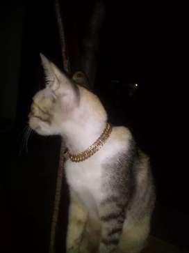 Kucing manja,5k aja