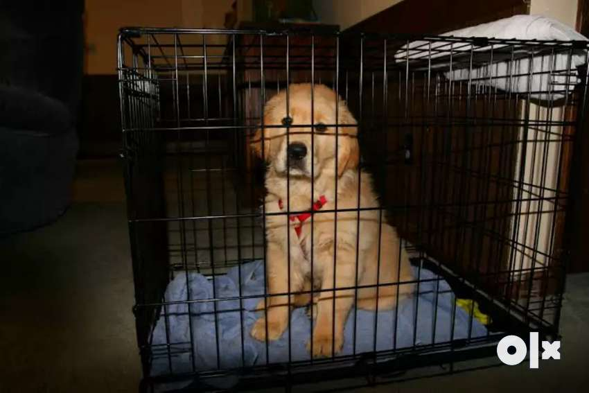 Pets Cages Available at Pet Shop