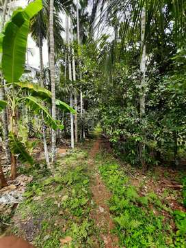 Available Plot with House for sale at Canacona