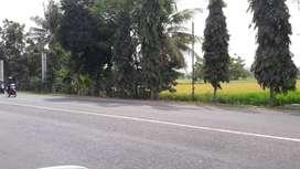 Dijual sawah mangku jalan , arah Bandara NYIA, 500 M dari RS UII
