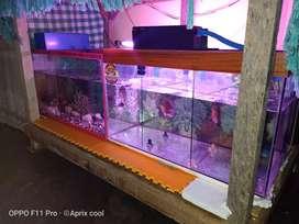 Sale Aquarium & Ikan Louhan