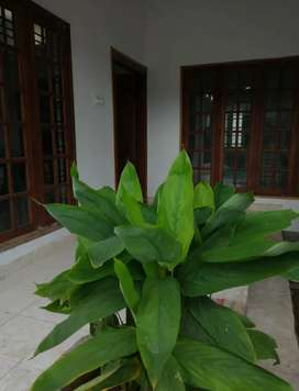Fully furnished 6 bedroom house for daily/weekly rent in Thrissur