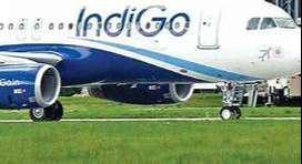 indigo airlines hiring ground staff apply today