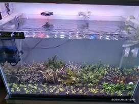Aquarium dan aquascape