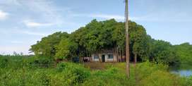 8.5 cent land and 25 cent field in kalathara chaal