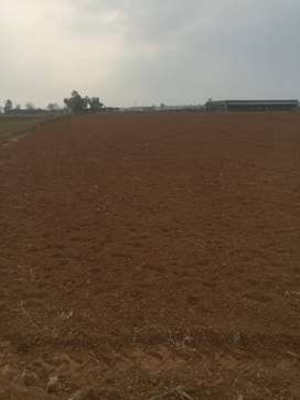Agro Farm 18.5 kanal for sale
