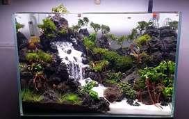 Fish Aquarium live plants