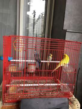 cage picture