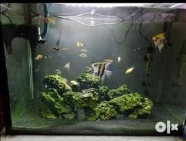 Tank with whole setup up for sale!