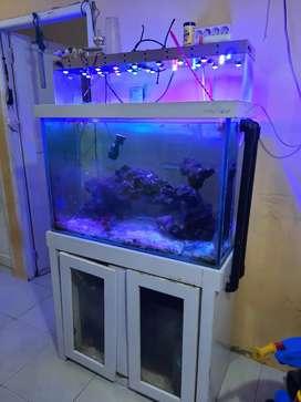 Dijual aquarium ukuran 90x40x60 lengkap aksesoris sump, pompa, dll