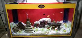 GUPPIES HOUSE