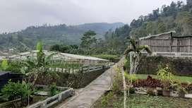 Tanah, villa dan kebun di kawasan wisata