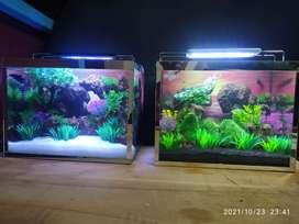 Aquarium Cupang 2021