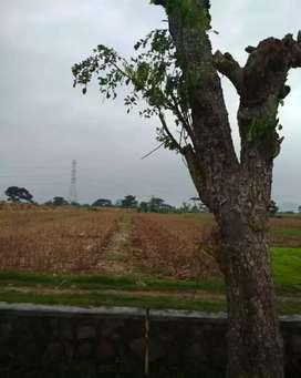 Sawah pertanian produktif, lokasi & akses strategis