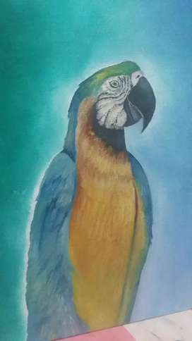 Painting of African Macaw