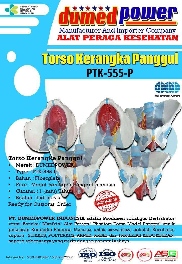 PTK-555-P | Torso Kerangka Panggul Manekin 0