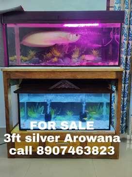 3 feet Aquarium