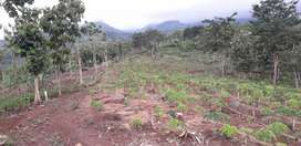 Tanah pegunungan untuk perkebunan