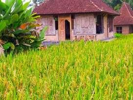 Villa Murah Di Ubud Harga Promo Akhir Tahun