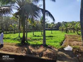 Agricultural land, 100m away from the road