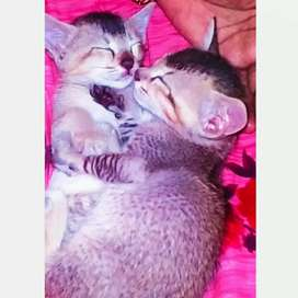 Cats available