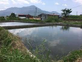 Tanah / bangunan / kolam pemancingan/ budidaya Ikan/padangpanjang