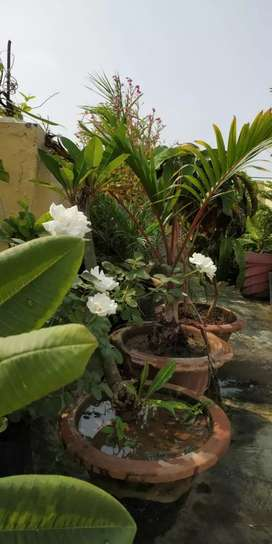 Buy or Rent My True Home Grown plants/Trees