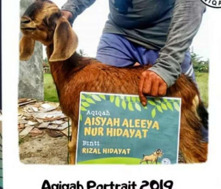 Kambing Aqiqah Type  A Kualitas Super Bandar Lampung dan Sekitarnya