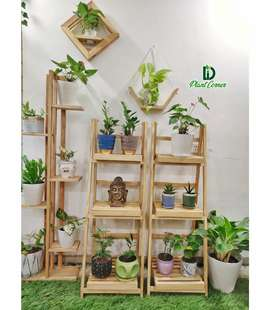 Indoor plants, imported ceramic pots and imported pine wood stands